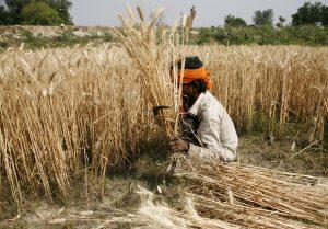up gov bundelkhand ask for fodder
