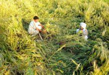 prime ministers crop insurance scheme