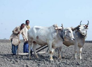 up gov bundelkhand ask for fodder
