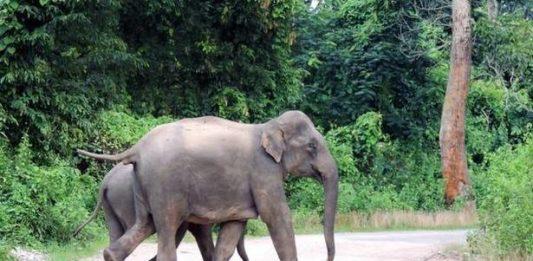 THE ELEPHANTS/NIS