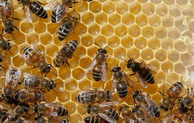 Threat to Bees Population
